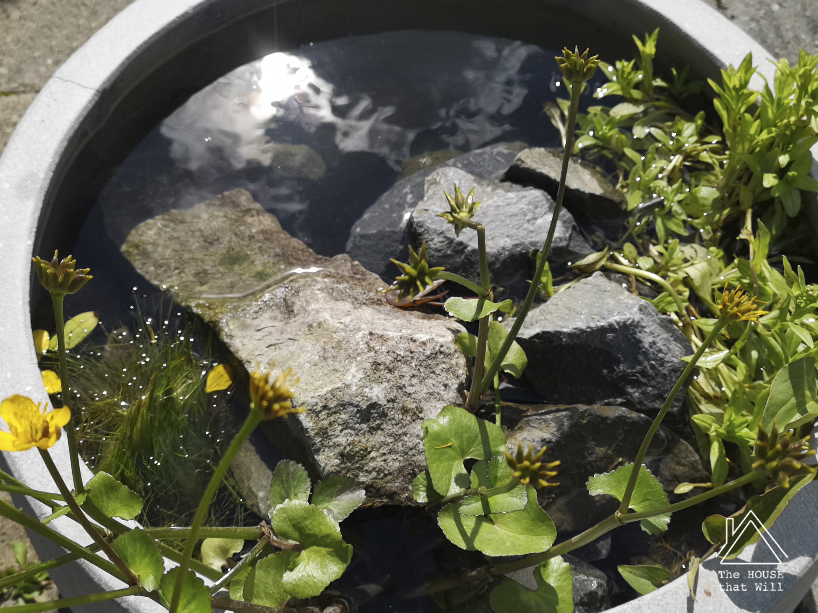 The House that Will | How to Creat a Mini Water Garden Wildlife Pond